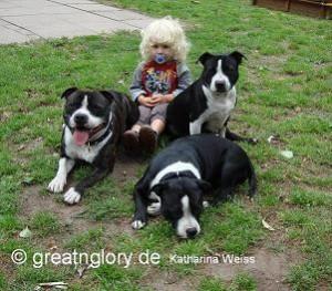 Staffordshire Bullterrier Familienfreundlich