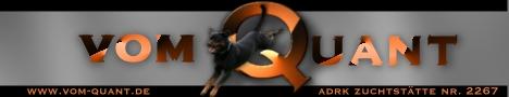 Rottweiler vom Quant