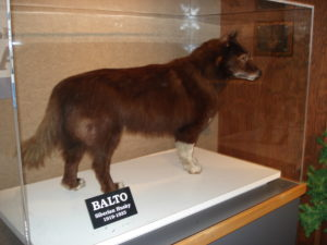 Balto Cleveland Museum of Natural History.