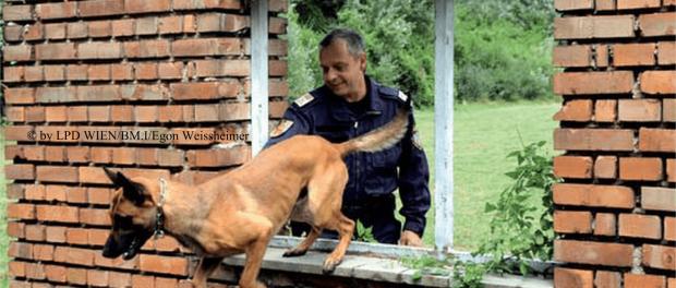 Polizeihund in Ausbildung