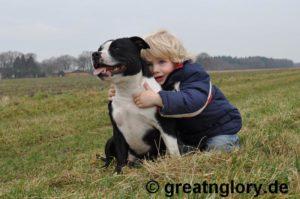 Kampfhunde-Gefährliche Killer oder treue Familienhunde?