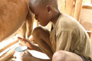 Impfen für Afrika