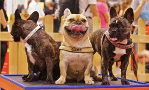Die Hund & Co Hannover müssen Sie besuchen