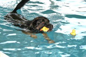 Erstes Hundehallenbad in der Weststeiermark eröffnet