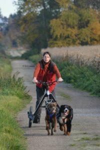 Dog Trike-Zughundesport