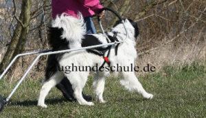 Pulka -Zughundeschule