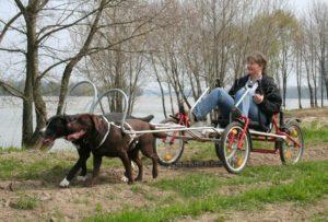 Sacco-dog-Cart -Zughundesport