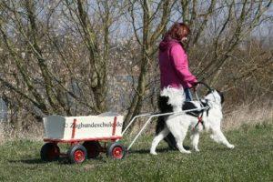 Zughundesport Bollerwagen