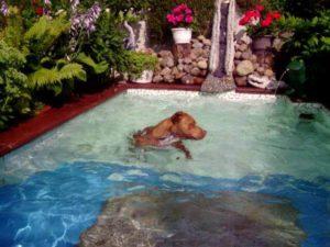 Hund im Pool/ Diego Müller