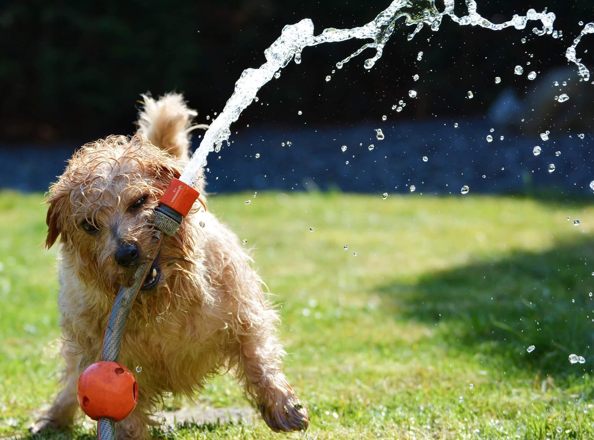 Hundeerfrischung im Sommer