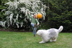 Hundefreundlicher Garten