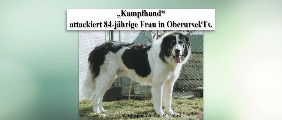 """""""Kampfhund"""" attackiert 84-jährige Frau in Oberursel/Ts."""