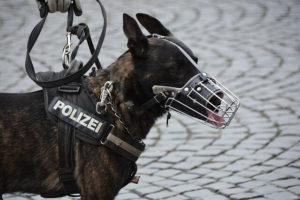 Schutzhund in der IPO und Diensthund