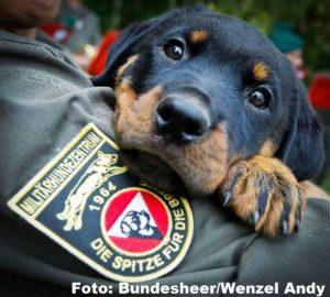 Vom Welpen zum Diensthund in Kaisersteinbruch
