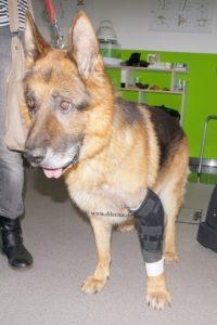 Bandagen, Orthesen und Prothesen