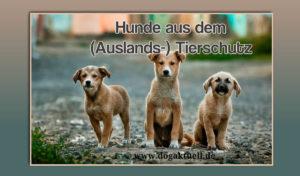 Hunde aus dem (Auslands-) Tierschutz