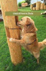 Urlaub mit Hund im Zillerta