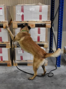 Hamburger Flughafen ersetzt Sprengstoffspürhunde durch Maschinen